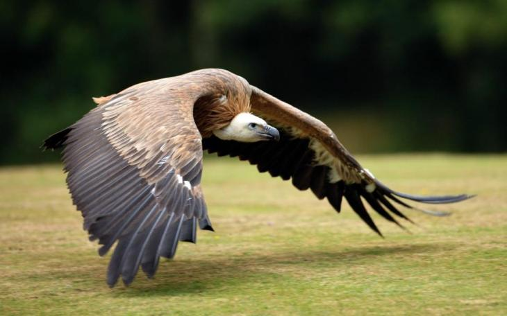 bird-flight-wings-vulture-2K-wallpaper-middle-size