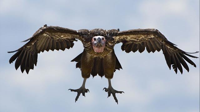 til-vultures-640