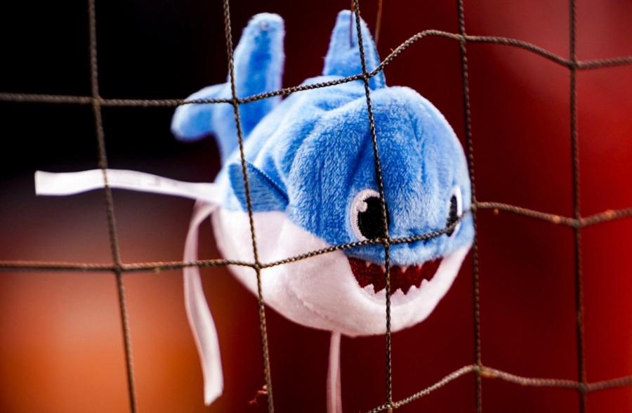 赤ちゃんサメ